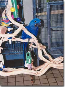 Parrots Having Fun