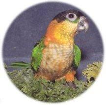 Avalon Aviary